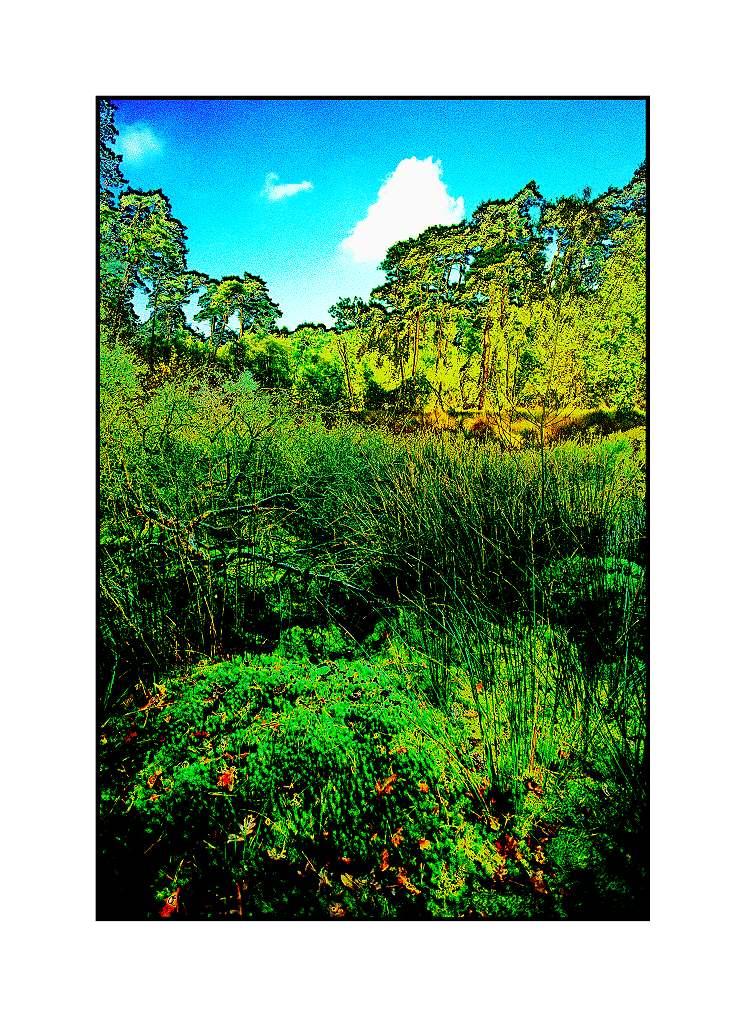 Sumpf-Diersfordt