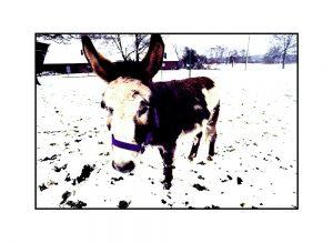 Esel im Schnee