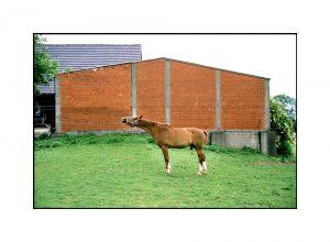 Pferd auf der Wiese in Kalkar