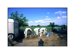 Kälber in Kälbchenställen in Grieth auf dem Feld